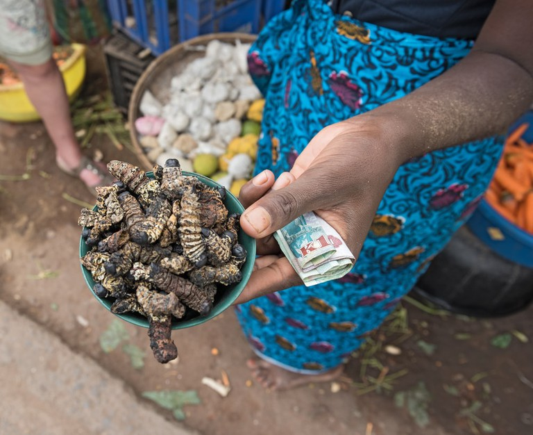 Caterpillars are a popular delicacy in Zambia