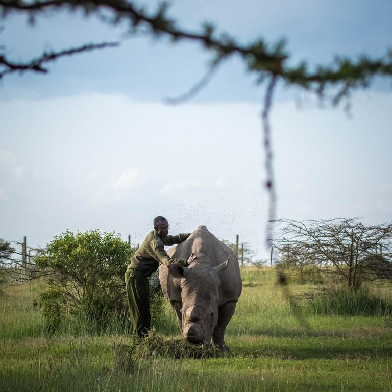 Rhino handler with Sudan in 2015 at the Ol Pejeta Conservancy
