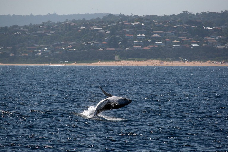 Whale watching in Sydney © Christopher Eden / Flickr