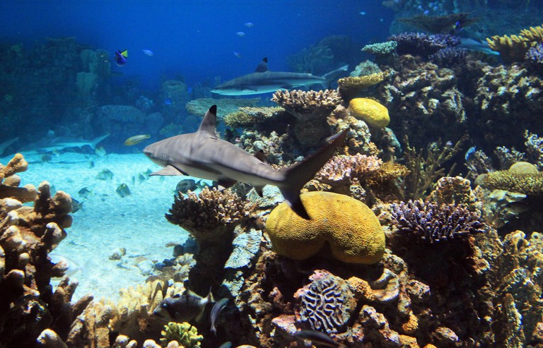 Blacktip Reef, Sharks, Aquarium, National Aquarium, Baltimore, Maryland