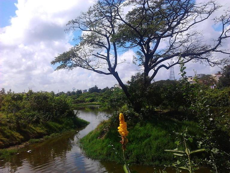 1024px-Adyar_Poonga's_waterbody_as_seen_from_Karpagam_Bridge,_MRC_Nagar6