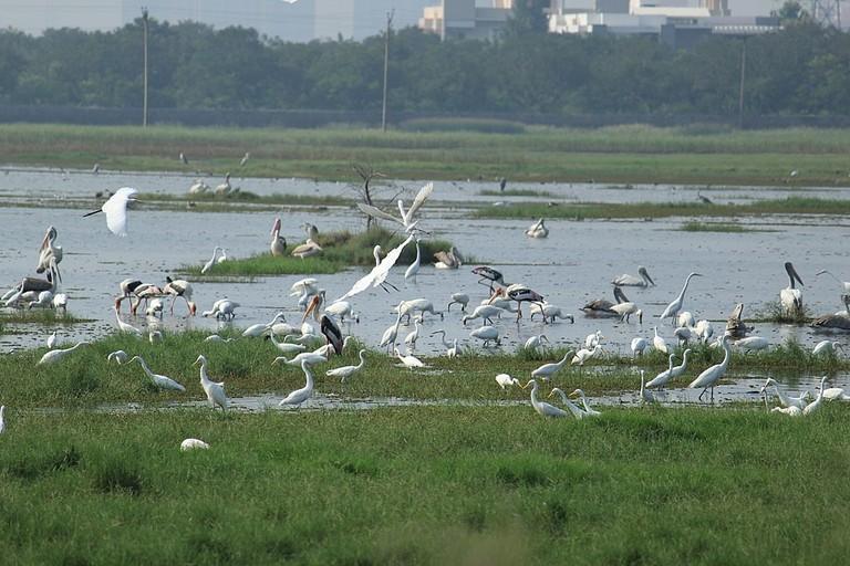 1024px-Fishing_of_different_species_of_birds_in_Marshland_Pallikaranai
