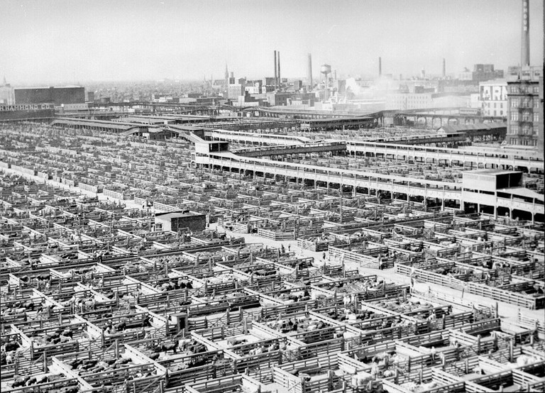 Pens of livestock fill Chicago's Union Stock Yards in the 1940s.