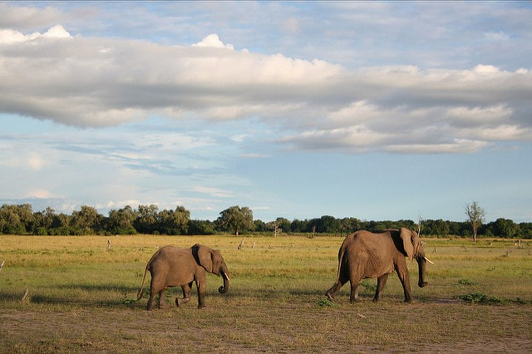 The Emerald Season in Zambia is a chance to spot baby animals in the national parks