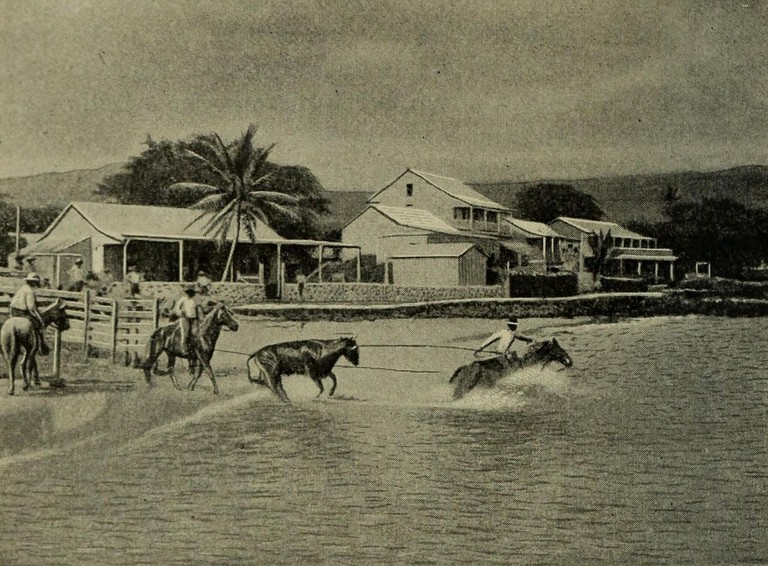 1280px-Loading_Cattle_at_Kailua,_Geography_of_the_Hawaiian_Islands_(1908)