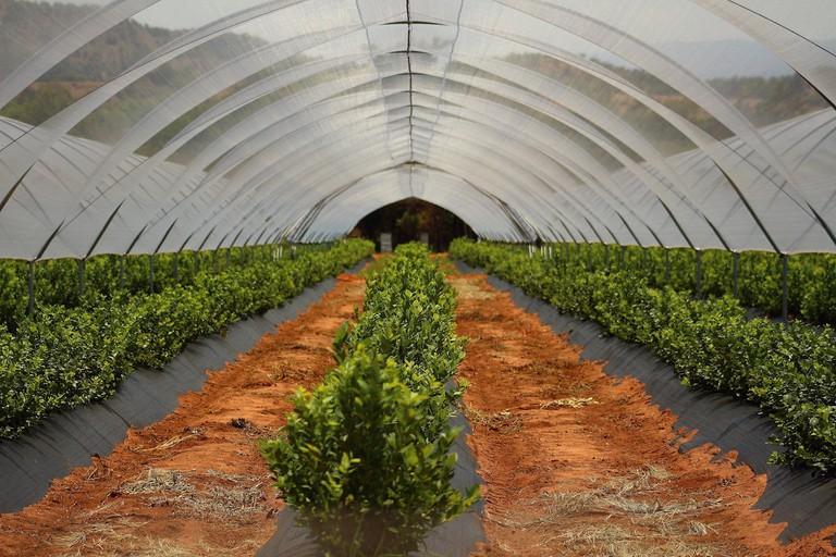 Nigeria's improved farming systems