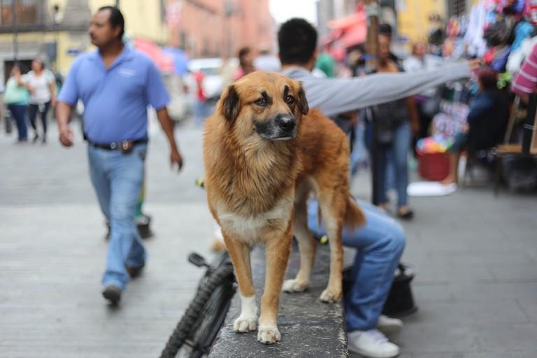 A Mexico City stray