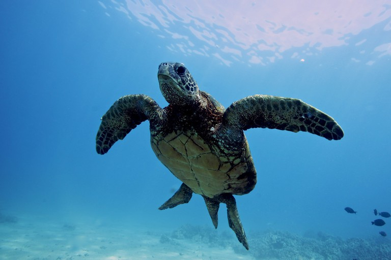 Sea turtles│