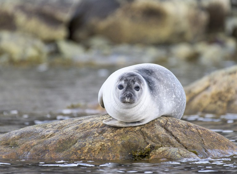 Harbor seals call the area home
