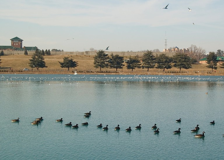 Lake Montebello, geese, Baltimore, Maryland