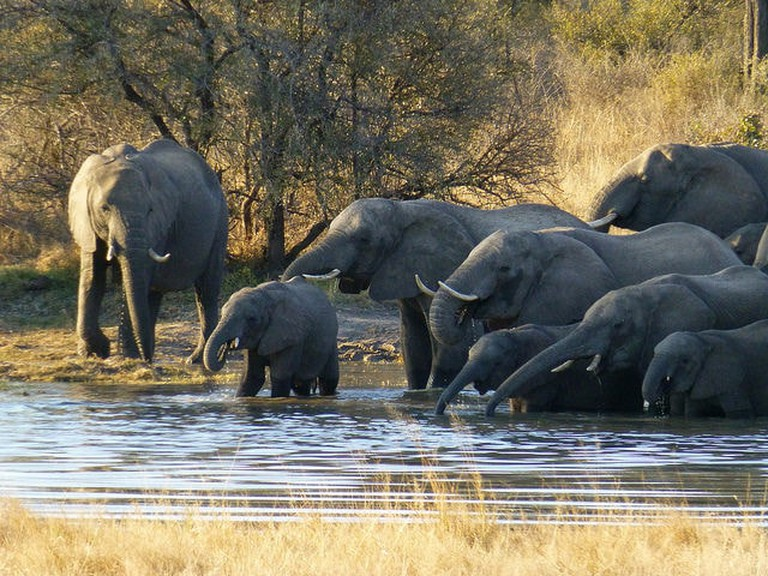 Elephants bathing in Zimbabwe