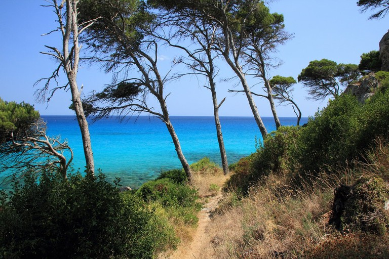 Pine forrest in Mallorca