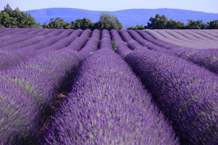 The beautiful lavender fields of Provence along the wine routes | © Ming-yen Hsu / Flickr