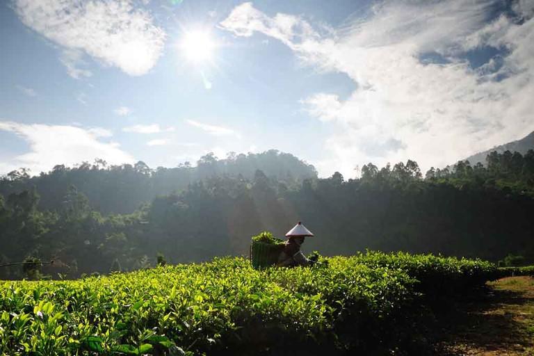 Tea Plucker's Land | © Tanti Ruwani / Flickr