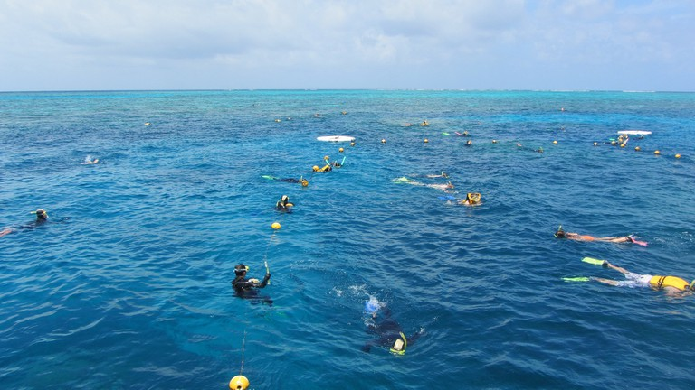 Snorkelling at Agincourt Reef