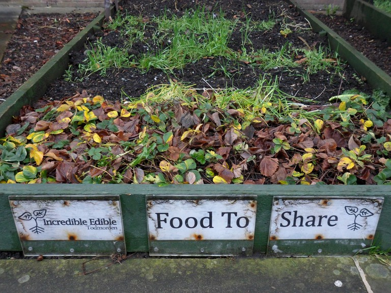 An Incredible Edible vegetable bed
