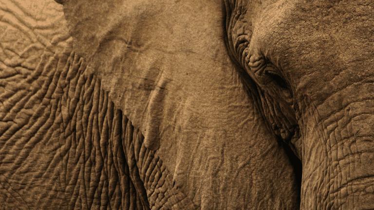 Animals adapting_elephant-min