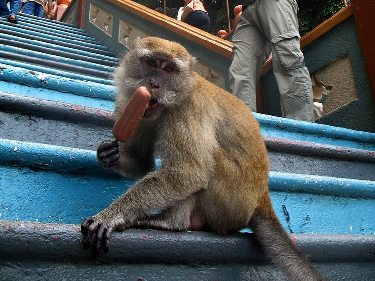 Hundreds of macaques can be seen in Batu Caves
