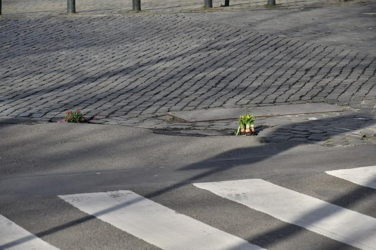 Flowers fill Brussels' potholes.