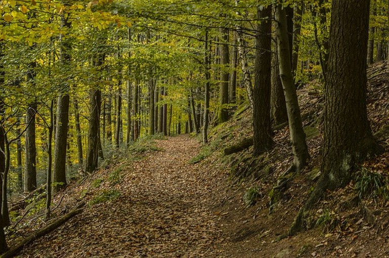 forest-2928362_640