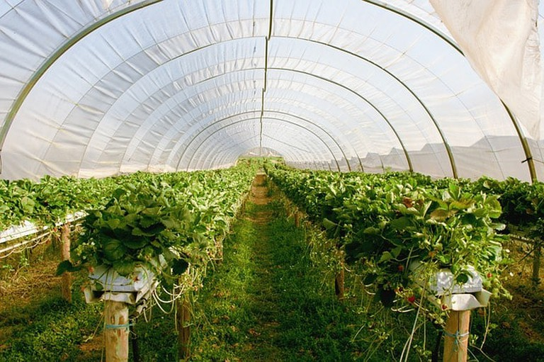 greenhouse-2096497_640