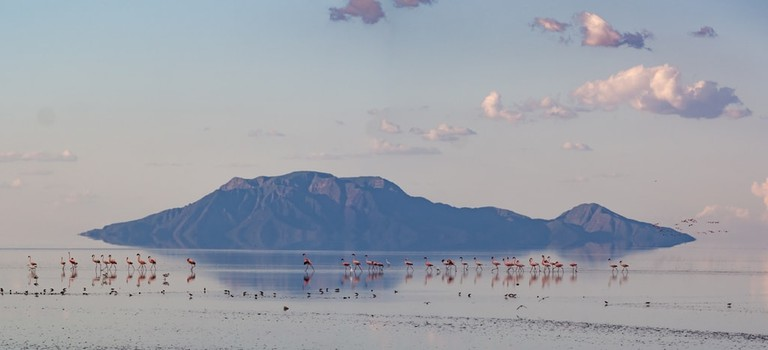 Lake Natron and its famous flamingos at sunset