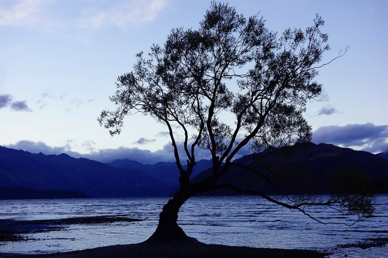 The lonesome willow tree in Lake Wanaka