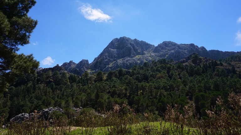 Grazalema supports a rich variety of flora and fauna