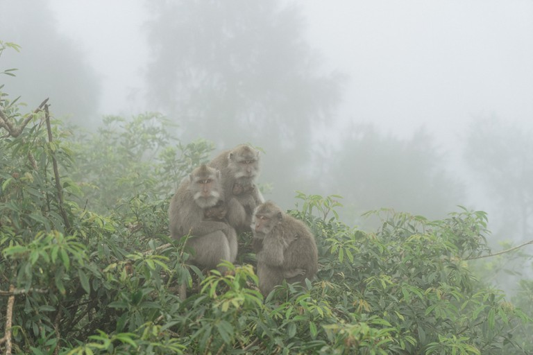 Monkeys in the mist