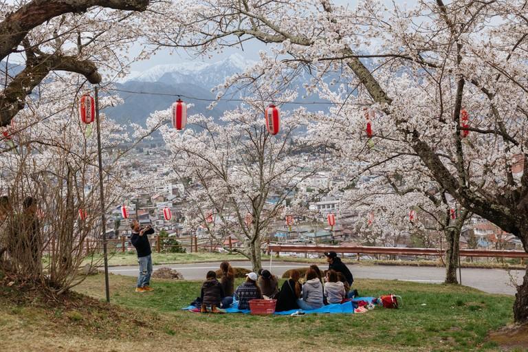 Sakura Nagano-Mount Fuji-Japan