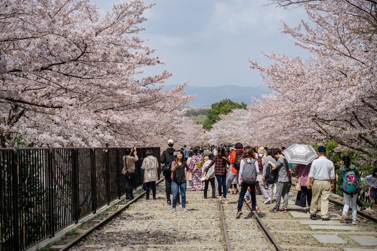 CHERRY BLOSSOM-KEAGE INCLINE-KYOTO-JAPAN