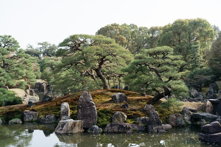 CHERRY BLOSSOM-NIJO CASTLE-KYOTO-JAPAN
