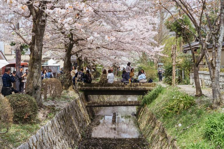 CHERRY BLOSSOM-PHILOSOPHER'S PATH-KYOTO-JAPAN