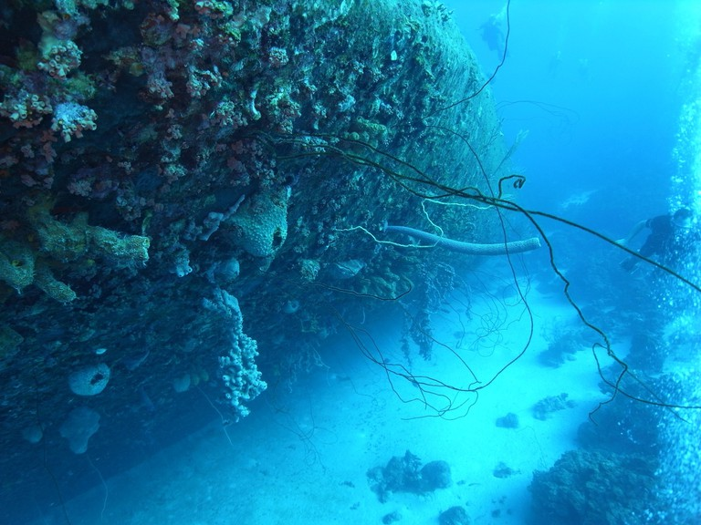 Sunken ships have become a haven for sea life