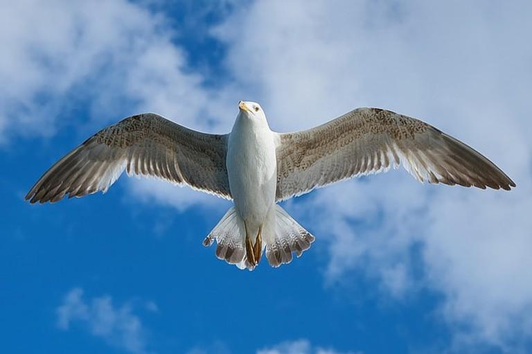 An ominous seagull
