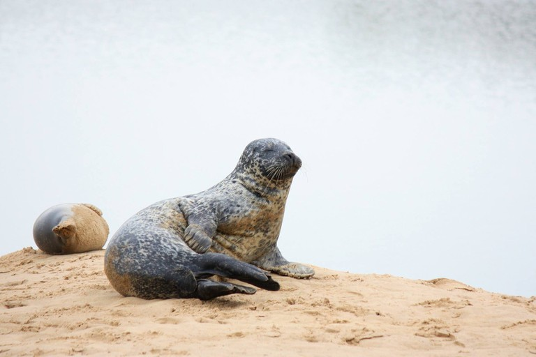 Seals hang out at the Domaine de Beauguillot Natural Reserve in Normandy