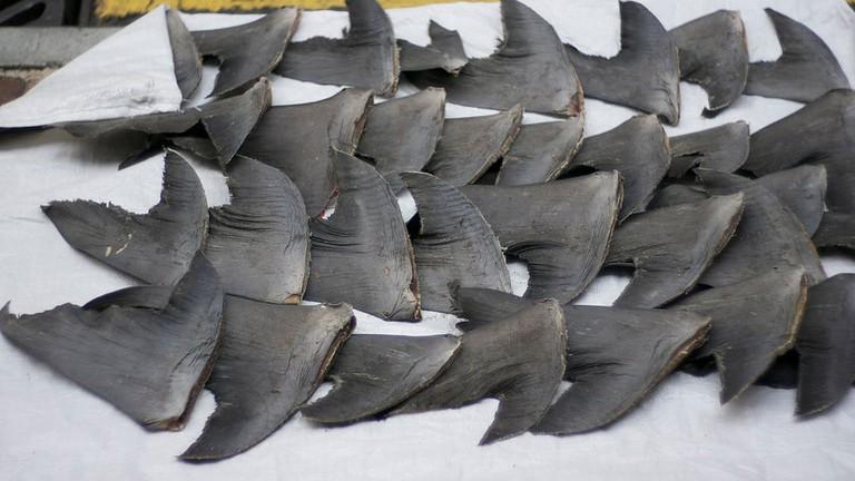 Shark fin soup Hong Kong