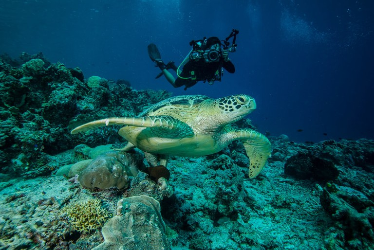 Diver and green sea turtle in Derawan, Kalimantan, Indonesia