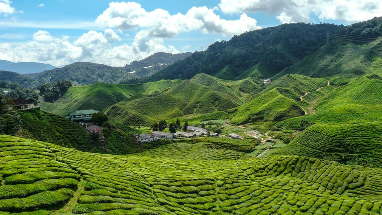For a more refreshing trip out of the city, head to Cameron Highlands to enjoy great views of the tea plantations