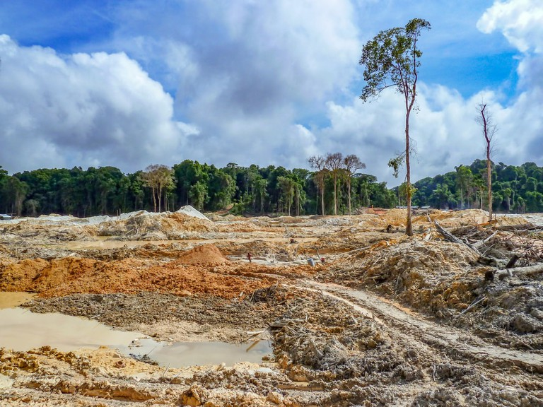 Rainforest destruction | © kakteen/Shutterstock