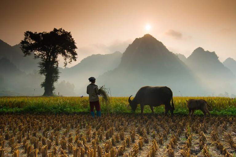 Vietnamphoto