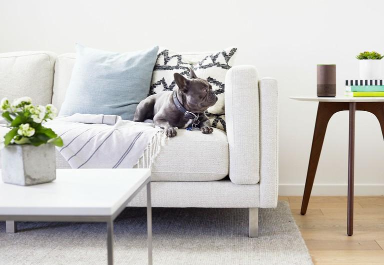Walnut Echo Living Room