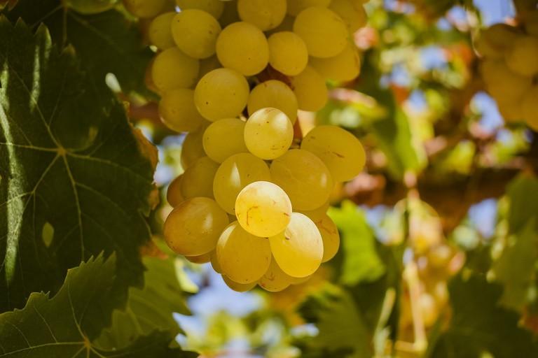 Lunahuana has vineyards to visit