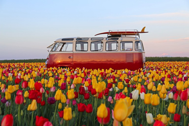 wooden-shoe-tulip-festival-1