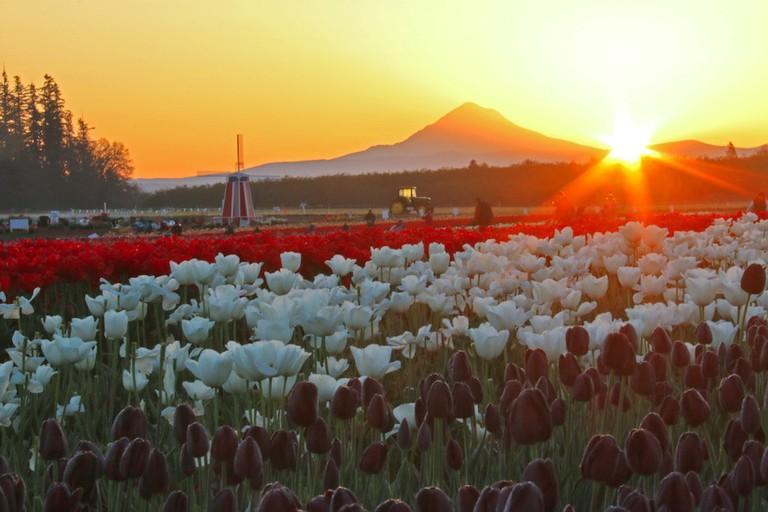 wooden-shoe-tulip-festival-3