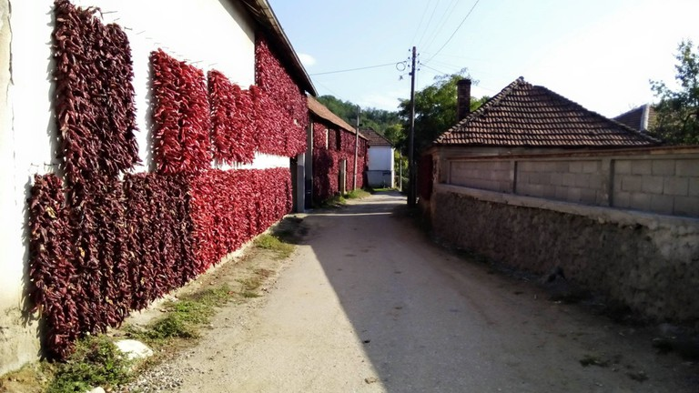 A wall of peppers in Donja Lokošnica