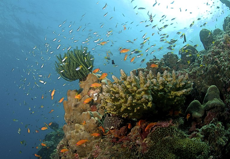 1280px-The_Coral_Reef_at_the_Andaman_Islands