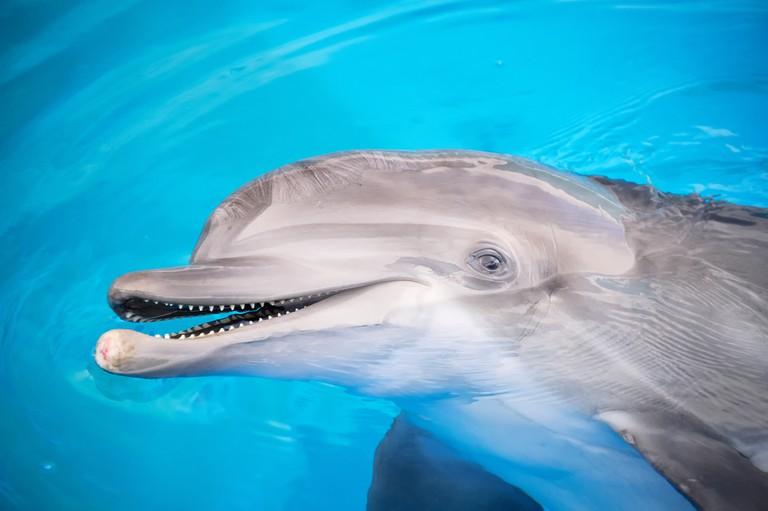 Smiling bottlenose dolphin