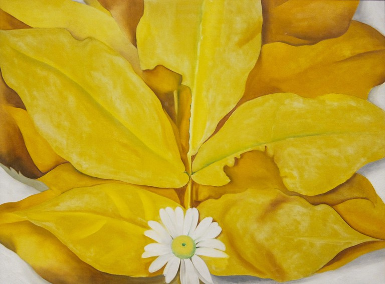 """Yellow Hickory Leaves with Daisy, 1928"" is one of many paintings by Georgia O'Keeffe on display at the Art Institute of Chicago"
