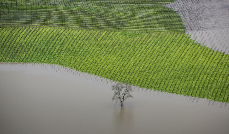 'Vineyard Flooding, Sonoma County' by George Rose